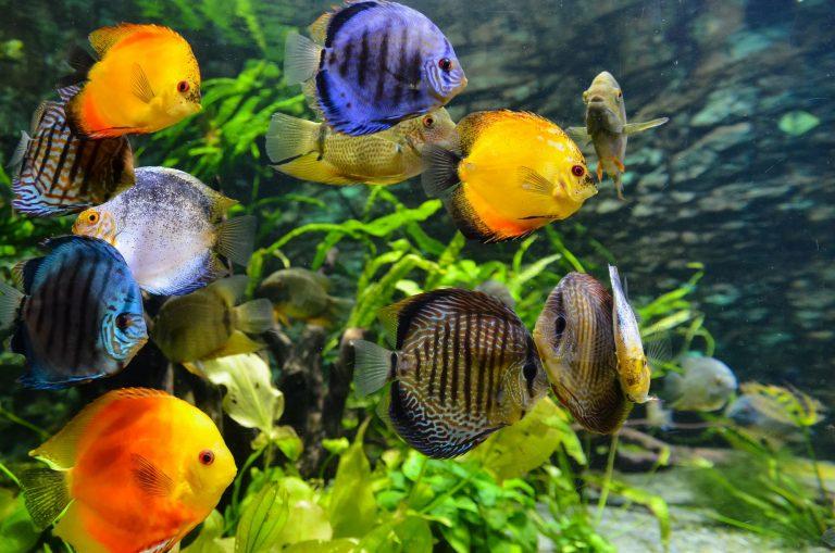School of Fish Inside Aquarium