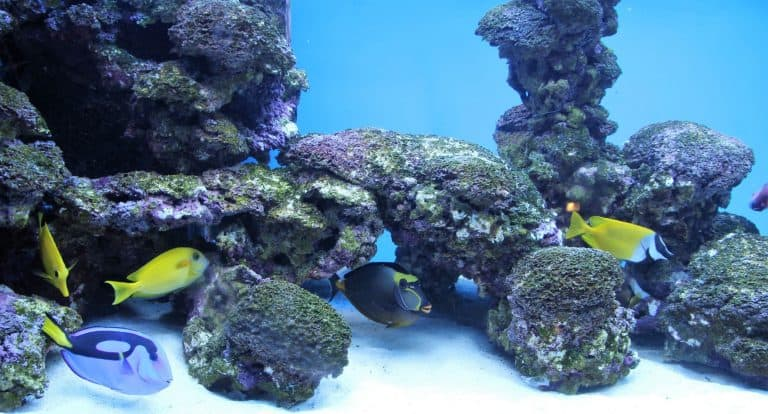 School of Fish in An Aquarium Swimming Near Rocks