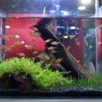 10 Gallon Fish Tank Inside Pet Shop