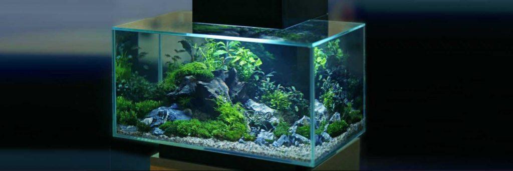 20 Gallon Fish Tank Featured Image