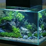 20 Gallon Fish Tank Featured Image