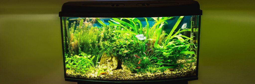 29 Gallon Fish Tank Inside Yellow Room