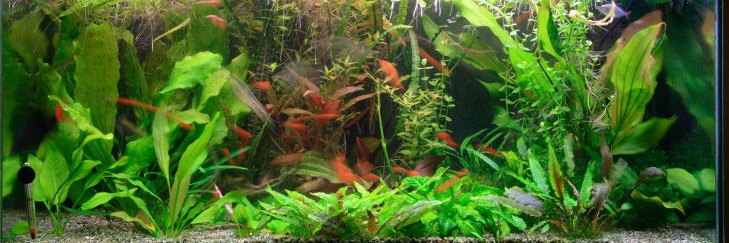 55 Gallon Fish Tank Full of Water Plants