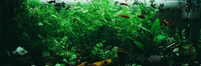 Big Aquarium with Plants