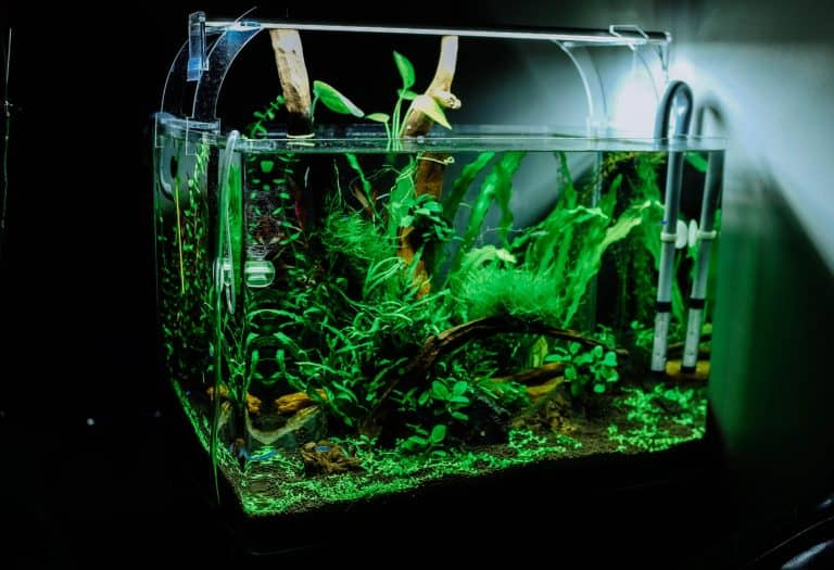Fish Tank Inside a Dimly Lit Room