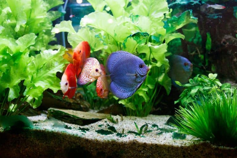 Fish Tank with Plants and Colorful Fish