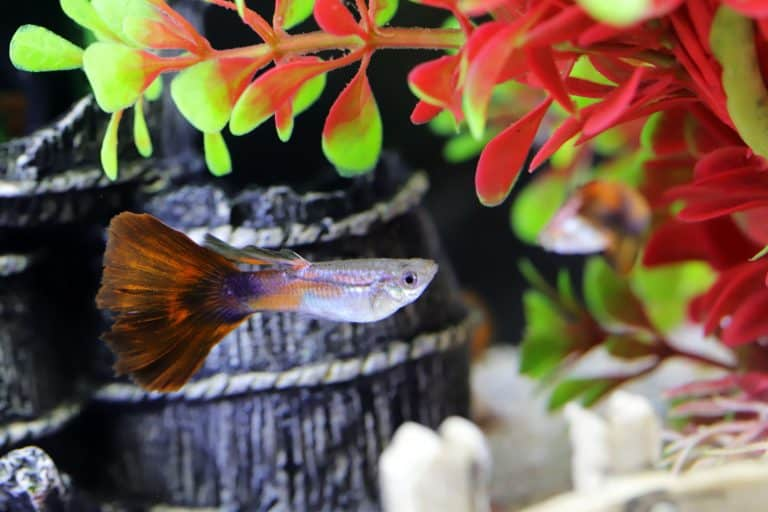 Goofy Fish Near Red and Green Plant
