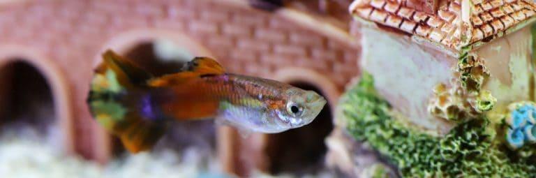 Goofy Fish Swimming Near Aquarium Decoration