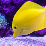 Yellow Fish Inside Aquarium
