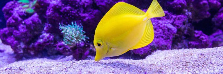 Yellow Fish Inside Aquarium