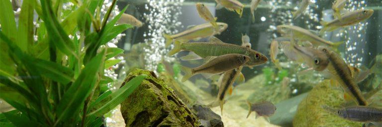 Fish Swimming inside an Aquarium Featured Image