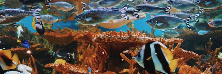 Big Fish Tank Featured Image