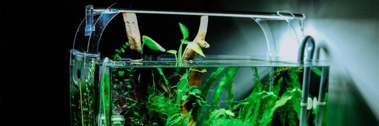 10 Gallon Aquarium Light Featured Image