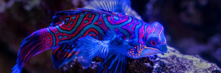 Best UV Sterilizer Featured Image
