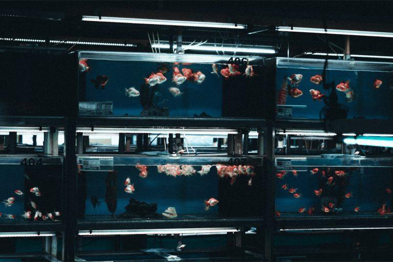 Fish Tanks Display