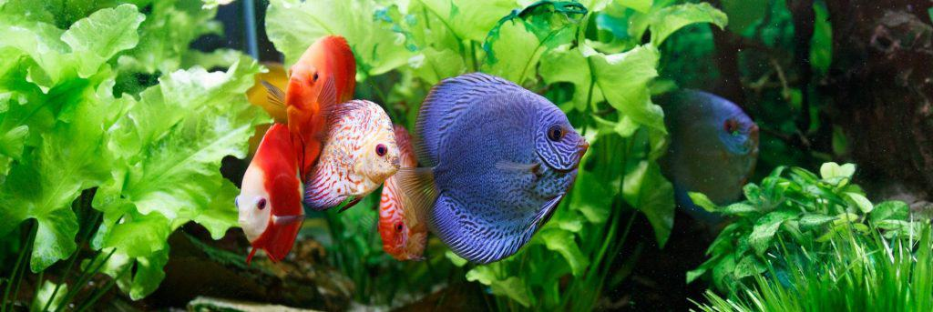 Fluval Accent Featured Image