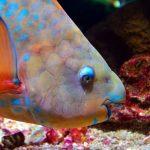 FAQs - parrotfish