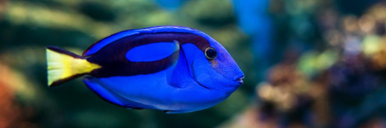 Featured Image - tangs