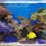 Yellow Tang in a Fish Tank