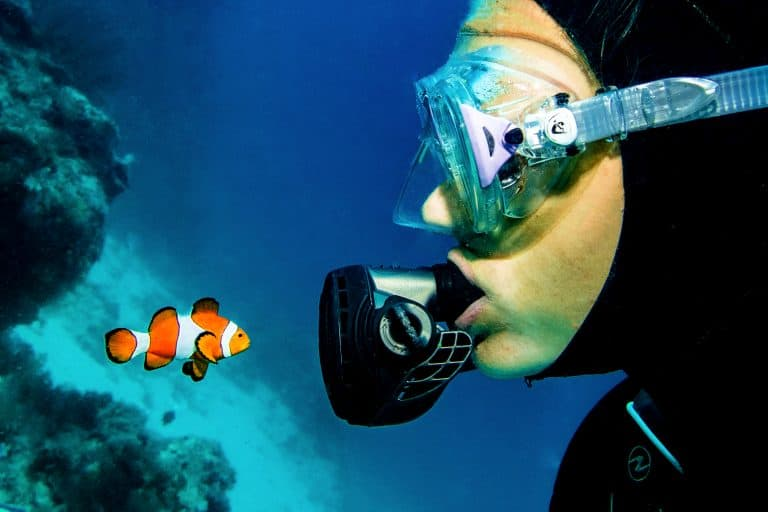 Diver Looking at an Anemonefish