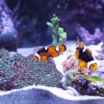 clownfish - chapter 5