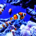 clownfish - chapter 7