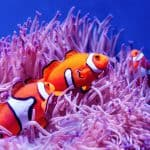 clownfish - chapter 9