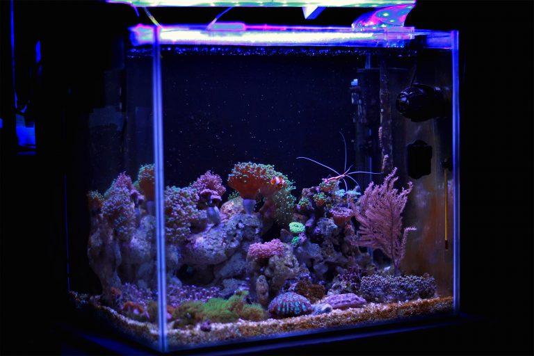 Nano Saltwater Reef Aquarium
