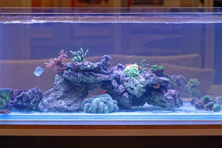 Fish Tank With Tropical Coral Reef Aquarium